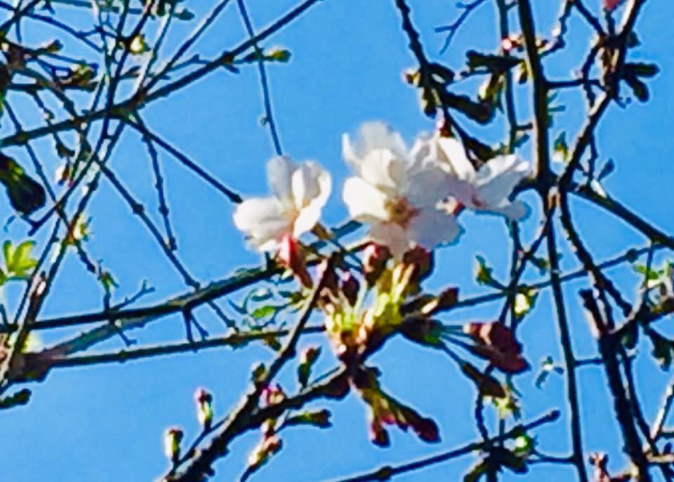 桜の名所にも提灯が並び花見の準備が進んでいます。来週の日曜日あたりが一番の見頃でしょうか。 そんな花見盛り(予想)の3月31日(日)11時より誠に恐縮ですが「かわさき英彦 後援会 総決起大会」を開催いたします。 春日市の可能性を。市民のひとりとして夢と希望を共有させて頂きたいと思います。